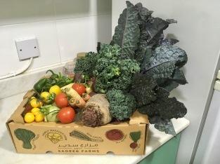 so many veggies